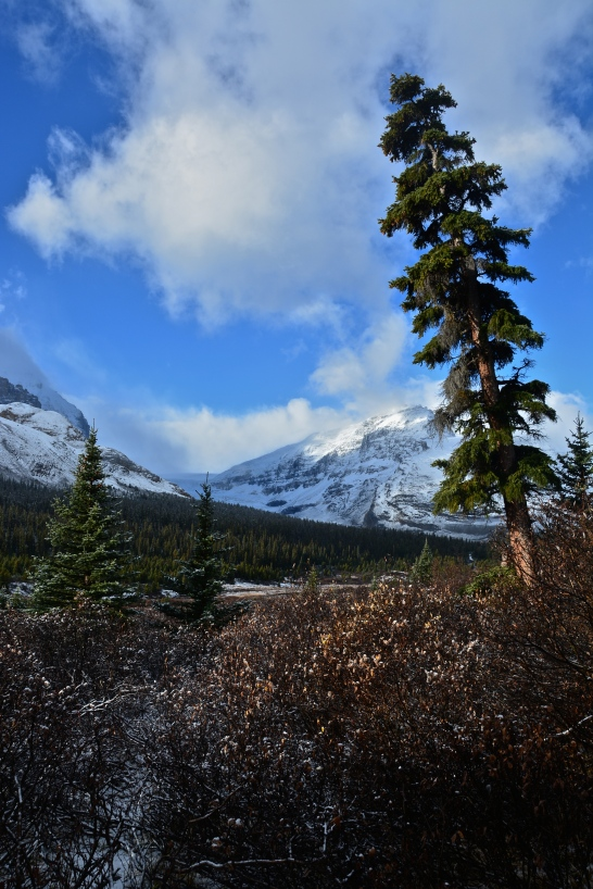Icefields Parkway Campground