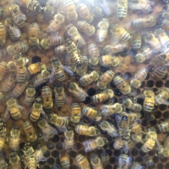 Planet Bee