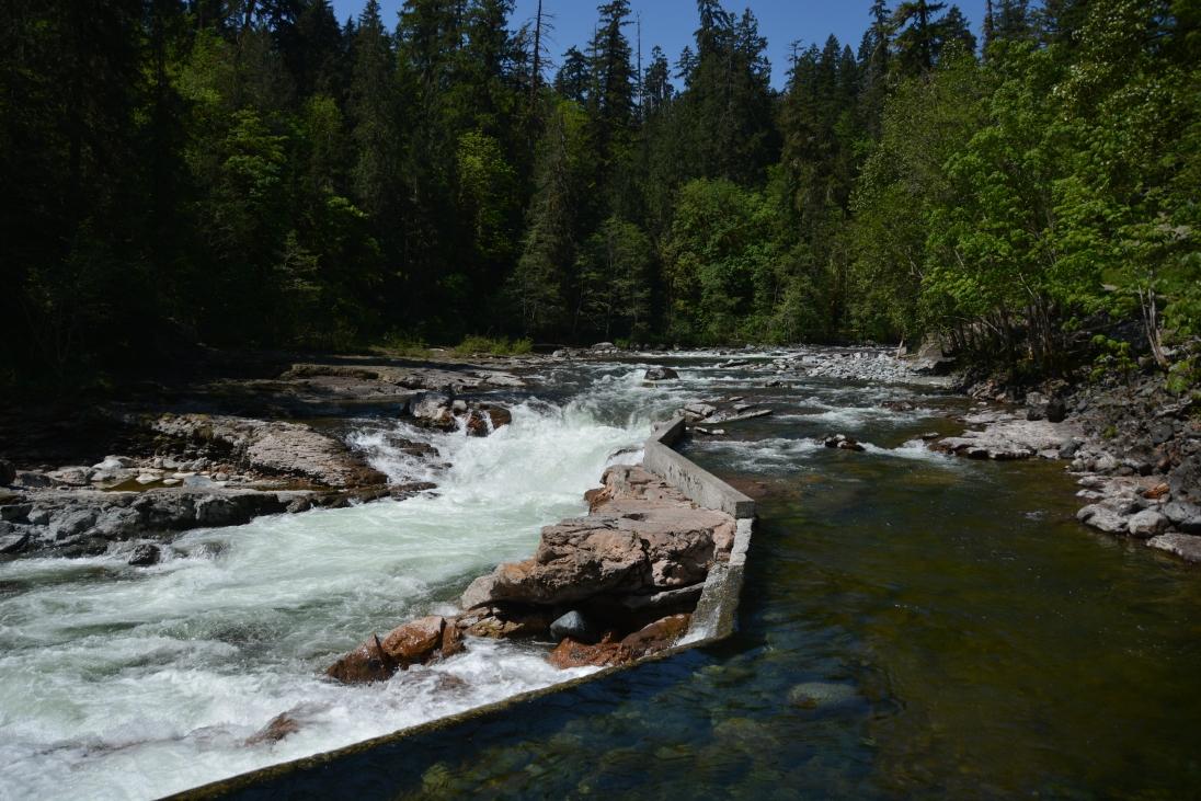 Stamp River